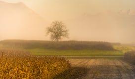 Árvore, névoa & cumes Imagens de Stock Royalty Free