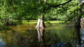 Árvore na água Fotos de Stock