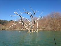 Árvore na água Fotografia de Stock Royalty Free