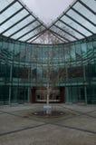 Árvore na área do pátio do prédio de escritórios de vidro moderno Foto de Stock Royalty Free