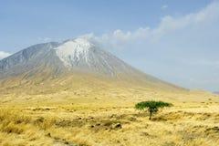 Árvore na base de Ol Doinyo Lengai Fotografia de Stock