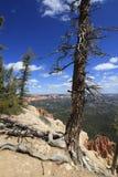 Árvore na borda Imagens de Stock