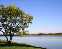 Árvore na borda da água fotografia de stock
