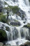 Árvore na cachoeira de Mae Ya. Foto de Stock Royalty Free