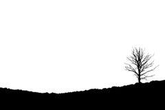 Árvore na charneca de inclinação, Posbank Rheden Países Baixos Imagem de Stock Royalty Free