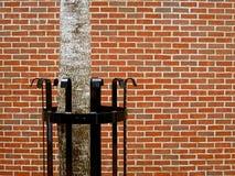 Árvore na cidade - natureza urbana imagem de stock