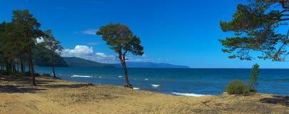 Árvore na costa arenosa do Lago Baikal imagens de stock