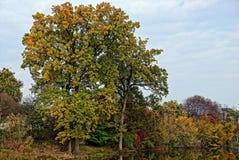 A árvore na costa da lagoa e da reflexão na água fotos de stock royalty free