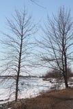 Árvore na costa do lago Foto de Stock