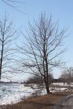 Árvore na costa do lago Imagens de Stock