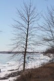 Árvore na costa do lago Imagem de Stock