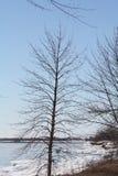 Árvore na costa do lago Imagens de Stock Royalty Free