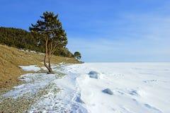 A árvore na costa do lago Baikal congelado imagens de stock royalty free