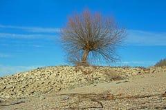 Árvore na costa do Reno Rhein fotos de stock