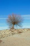 Árvore na costa do Reno Rhein fotografia de stock royalty free