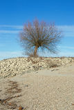 Árvore na costa do Reno Rhein foto de stock royalty free