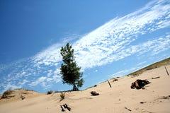 Árvore na duna Foto de Stock Royalty Free