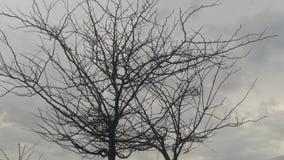 Árvore na escuridão Foto de Stock