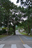 Árvore na estrada Fotografia de Stock Royalty Free