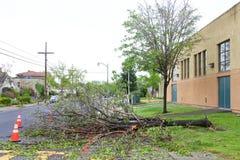 Árvore na estrada após tempestades recentes em Califórnia do norte foto de stock royalty free