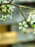 Árvore na flor fotos de stock