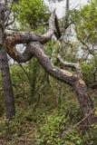 Árvore na floresta fotografia de stock