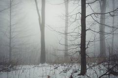 Árvore na floresta fria do inverno com névoa e neve Fotografia de Stock Royalty Free