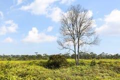 Árvore na floresta verde Foto de Stock Royalty Free