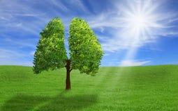 Árvore na forma dos pulmões, conceito do eco Fotografia de Stock