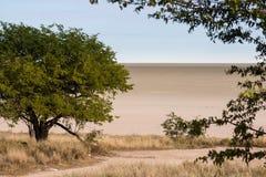 Árvore na frente da bandeja de sal, parque nacional de Etosha, Namíbia Fotos de Stock Royalty Free