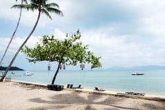A árvore na frente da praia Foto de Stock Royalty Free
