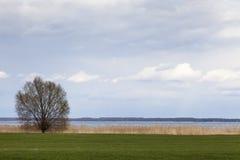 Árvore na frente do lago 2 Imagem de Stock