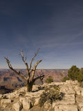 Árvore na garganta grande Fotografia de Stock Royalty Free