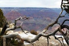 Árvore na garganta grande fotos de stock royalty free