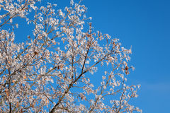 Árvore na geada branca Fotos de Stock Royalty Free
