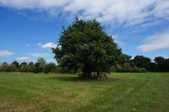 Árvore na grama Imagens de Stock Royalty Free