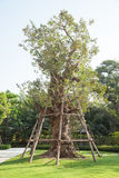 Árvore na grama verde Foto de Stock Royalty Free