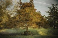 Árvore na hora dourada no parque, céu no fundo fotos de stock royalty free