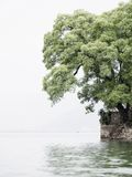 Árvore ao lado de um lago fotografia de stock