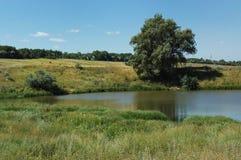 Árvore na lagoa Imagens de Stock Royalty Free