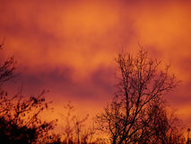 Árvore na luz da manhã Foto de Stock Royalty Free