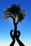 Árvore na mão Fotos de Stock Royalty Free