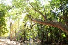 Árvore na manhã Fotografia de Stock