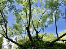 Árvore na mola imagem de stock royalty free