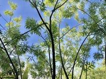 Árvore na mola foto de stock