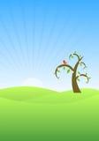 Árvore na mola Fotografia de Stock Royalty Free