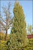 Árvore na mola Foto de Stock Royalty Free