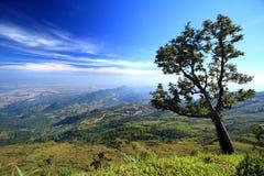 A árvore na montanha Foto de Stock Royalty Free
