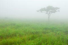 Árvore na névoa Fotografia de Stock