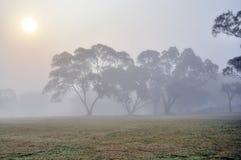 Árvore na névoa Fotografia de Stock Royalty Free